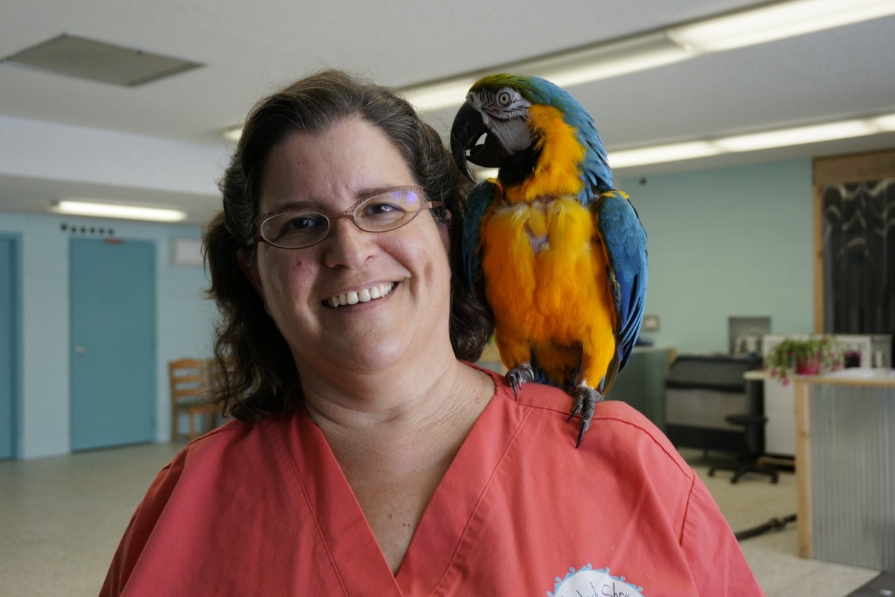 Grocko_blue-gold macaw_from_Parrot Rescue